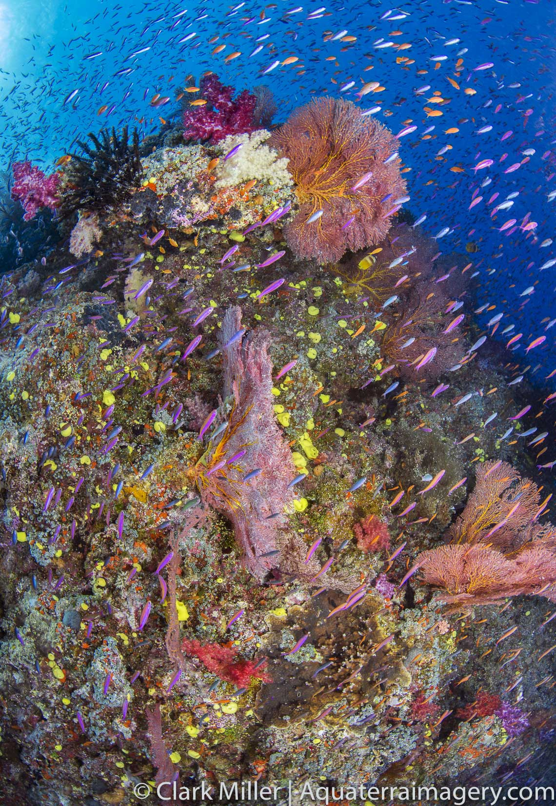 Nearly 50% of all coral reefs on earth are either dead, declining or threatened.  These coral reefs may be some of the last images before the devastating Catagory 5 Cyclone Winstone that hit Fiji in February 2016.