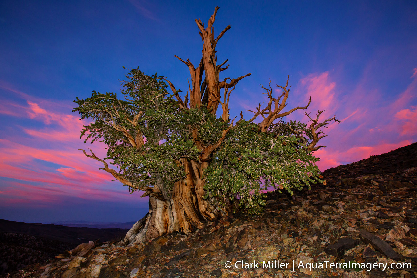 Bristlecone Pine Forest July 2014 1320-2 4web