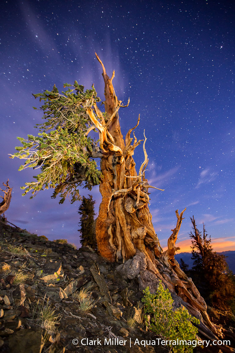 Bristlecone Pine Forest July 2014 1335-2 4web