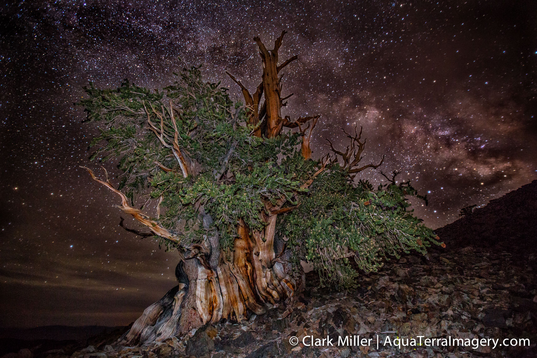 Bristlecone Pine Forest July 2014 1350-2 4web