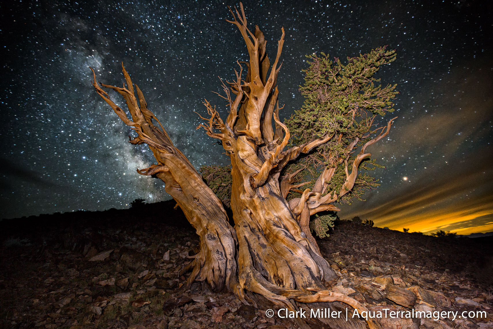 Bristlecone Pine Forest July 2014 1378 4web